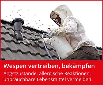Wespen Was Hilft Gegen Wespen Wespenfeuerwehr