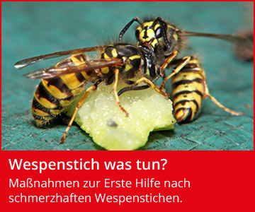 Wespenstich was tun?